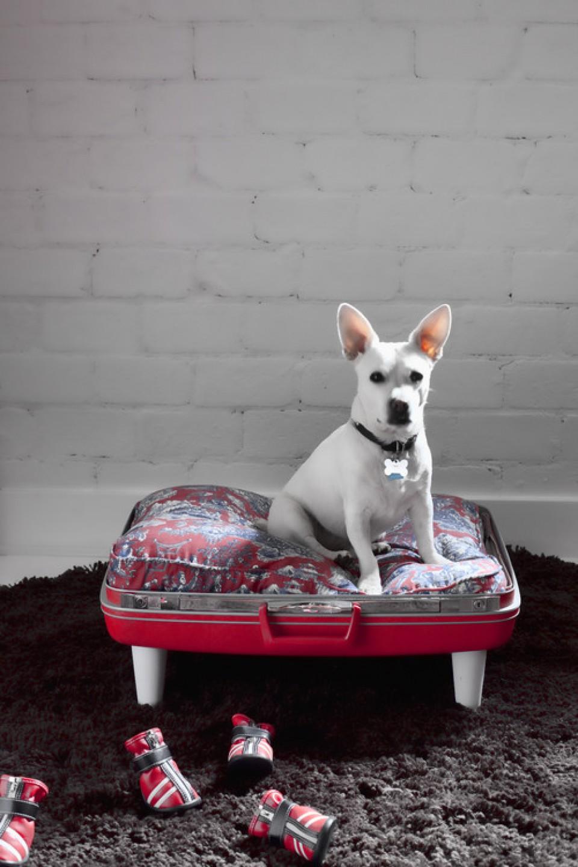 Pet Lover Desain Interior Unik Untuk Binatang Peliharaan Kesayanganmu Furnizing