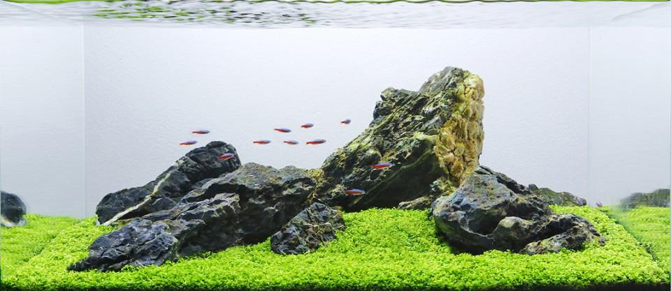 Punya Akuarium Besar Di Rumah Terapkan Salah Satu Style Aquascape Favoritmu Untuk Mempercantik Tampilan Akuarium Furnizing