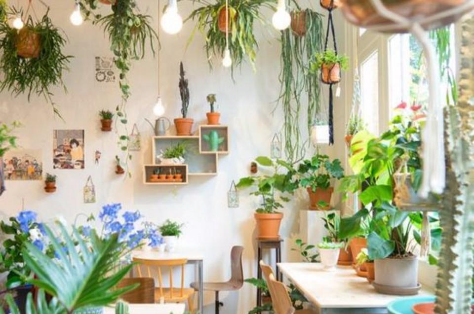 Berbagai Tanaman Yang Co Untuk Indoor Rumah Sebagai Dekorasi Di Dalam Hunianmu